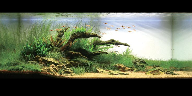 nature aquarium inspiration for 100 gal south american tank
