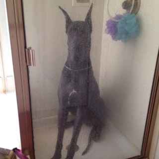 Washing a Great Dane