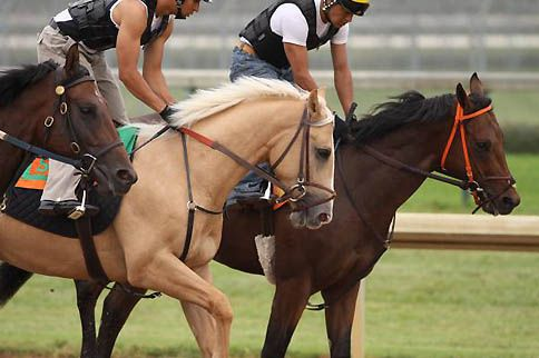 This is Regalo Del Oro at the track in 2009