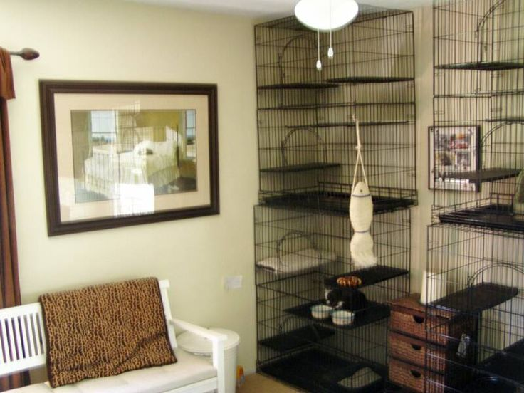 Cat Room Ideas Porter Creek Pinterest