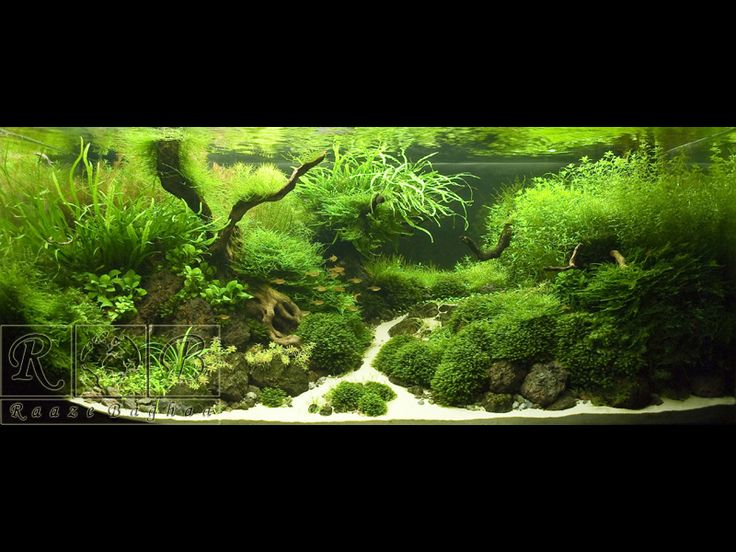 Inspirational fish tank design aquariums Pinterest