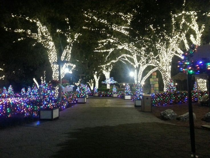 Tampa Busch Gardens Christmas Town 2013 Bush Garden