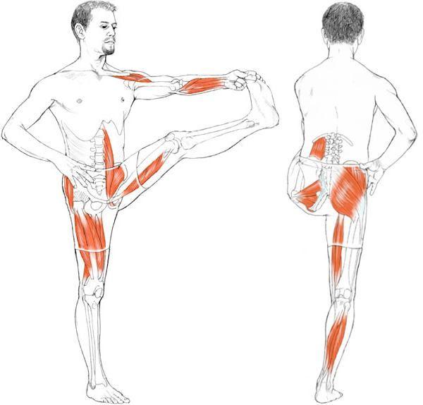 Utthita Hasta Padangusthasana | Yoga Anatomy | Pinterest