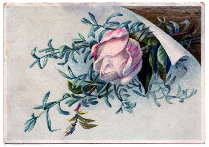 *The Graphics Fairy LLC*: Pretty Vintage Graphic - Pink Rosebud