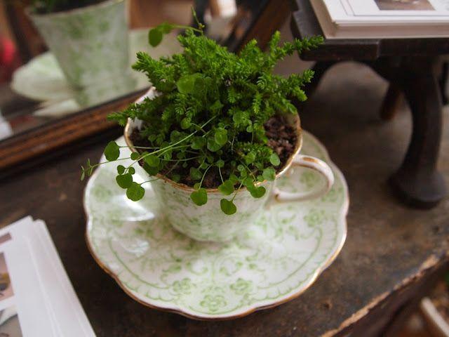 garden in my tea cup