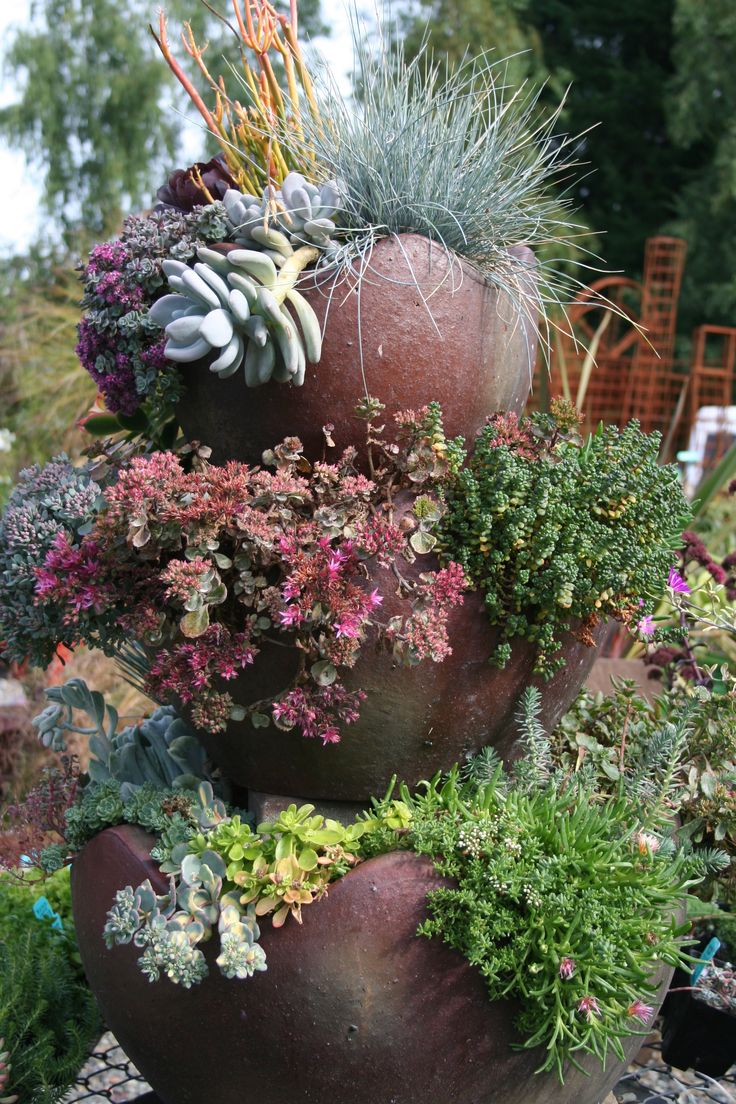 Container garden succulents garden ideas pinterest - How to make a succulent container garden ...