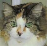 Declawed Cats For Adoption Miami
