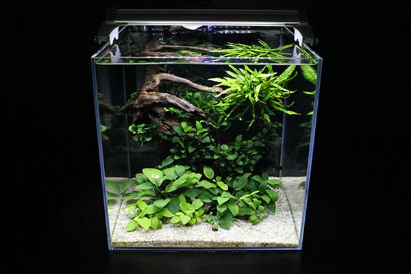 Nano Modern Aquascaping Aquariums Pinterest
