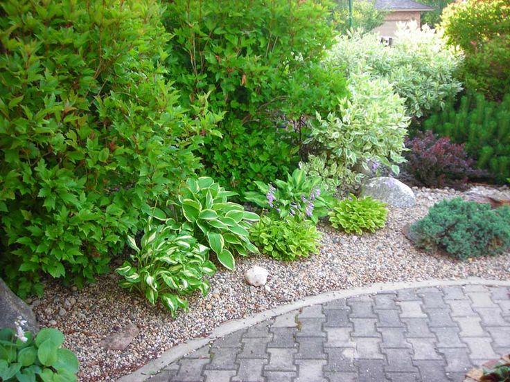 Evergreen shrub border beautiful yard ideas pinterest for Shrubs for garden borders