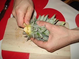 Comment faire pousser un ananas faire pousser fruits et l gumes a l - Comment pousse les kiwi ...