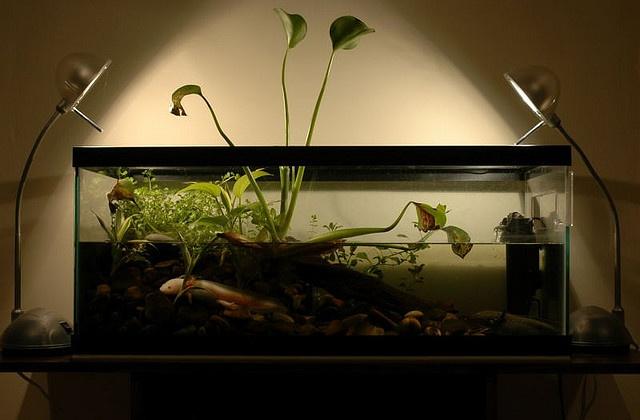 axolotl in planted tank   Aquariums   Pinterest 10 Gallon Fish Tank Ideas