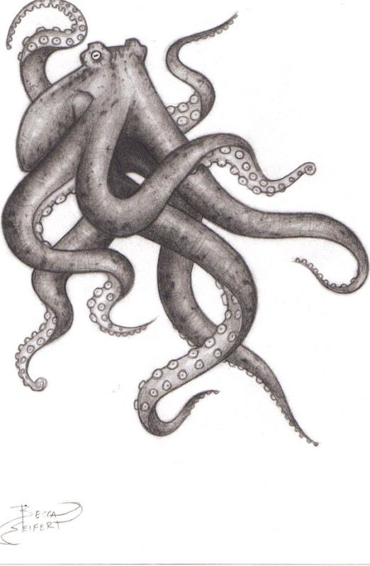 Octopus   Octopus drawings and How to   Pinterest