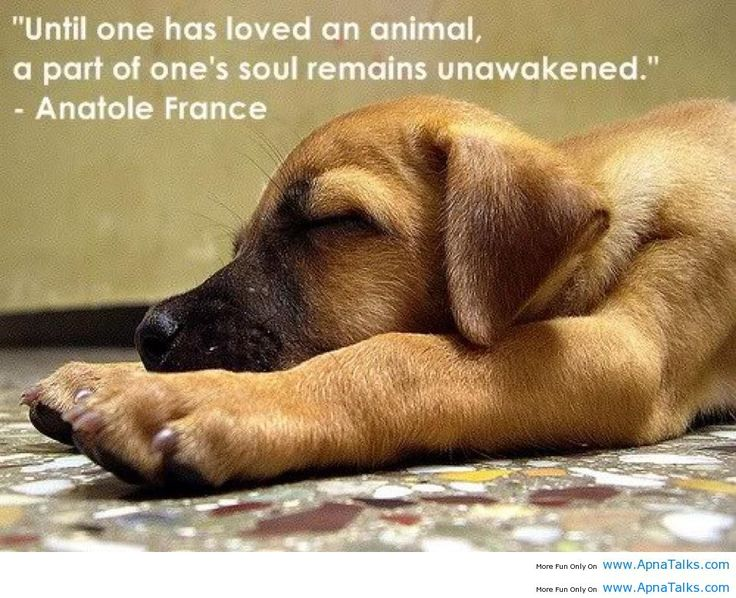 Anatole France Quotes About Animals Quotesgram