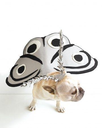Moth-Dog costume tutorial for Halloween.