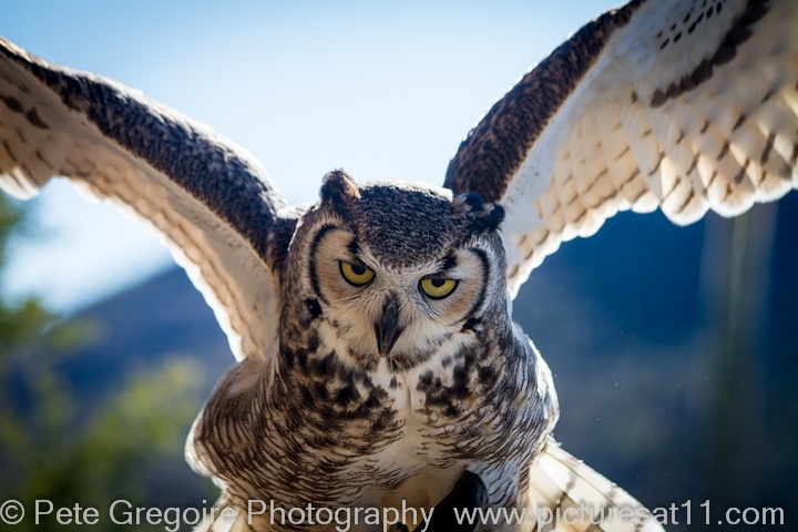Great horned owl in flightFlying Horned Owl Tattoo