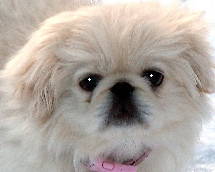 listings luvette carlos white doggy