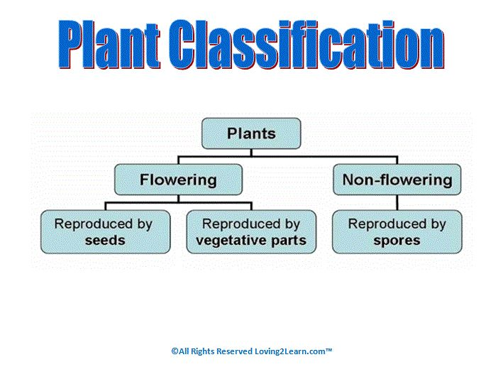 Image Gallery of Plant Classification Worksheet – Plant Classification Worksheet