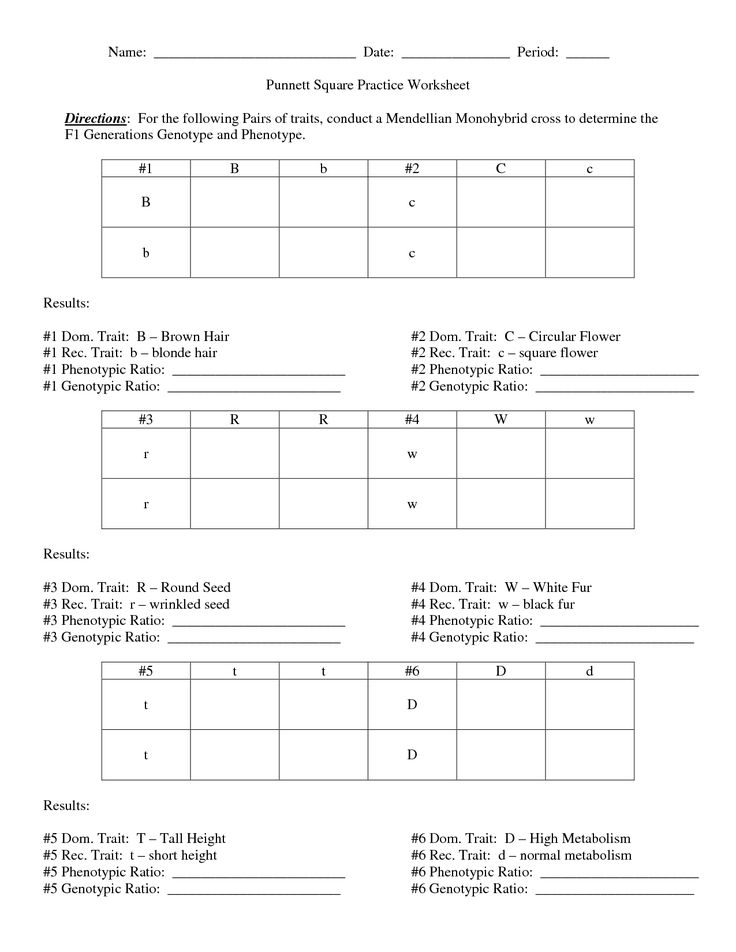 Square Practice Worksheet Answers including punnett square practice ...