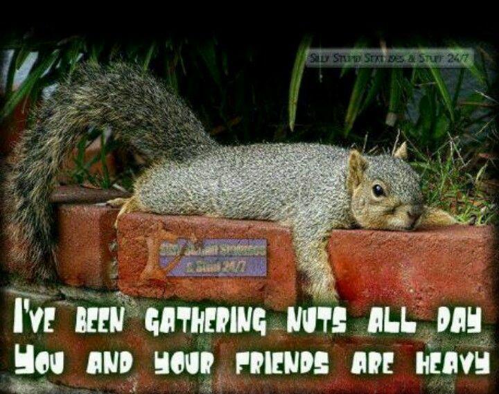 Squirrel Quotes Quotesgram