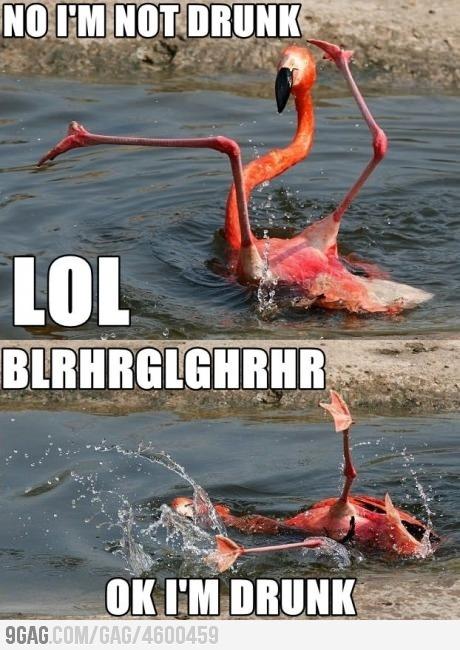 those crazy birds.