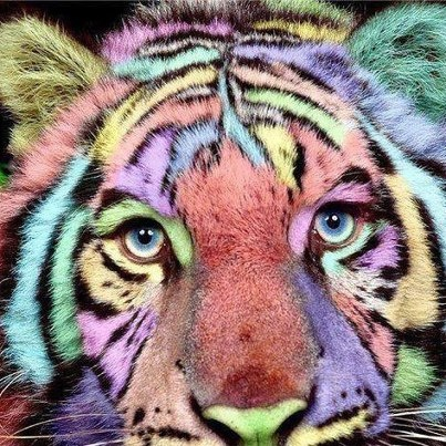 Beautiful Cat Art