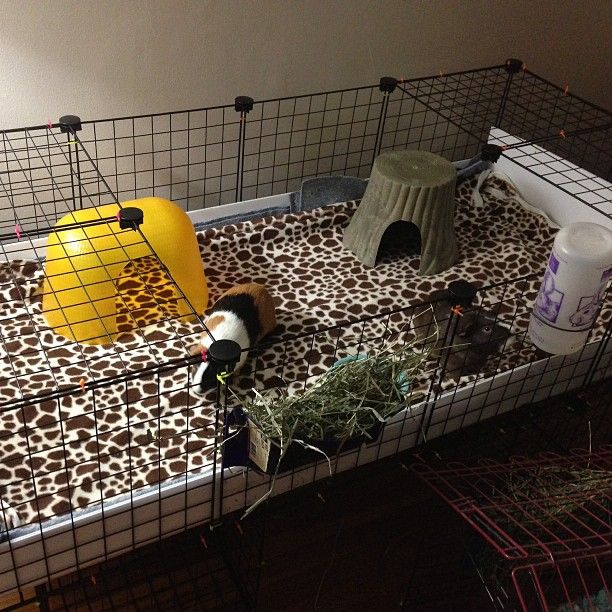 Guinea pig palace small pets pinterest for Diy c c guinea pig cage