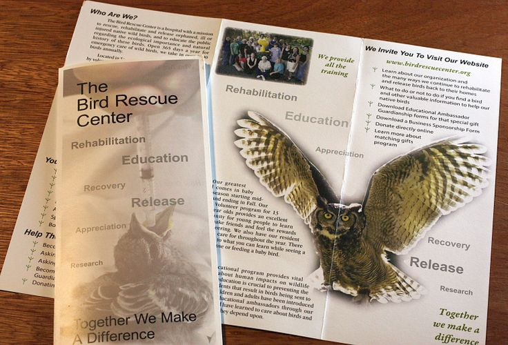 bird rescue center brochure