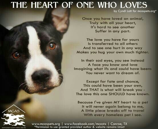 Animal Rescue Quotes And Sayings. QuotesGram