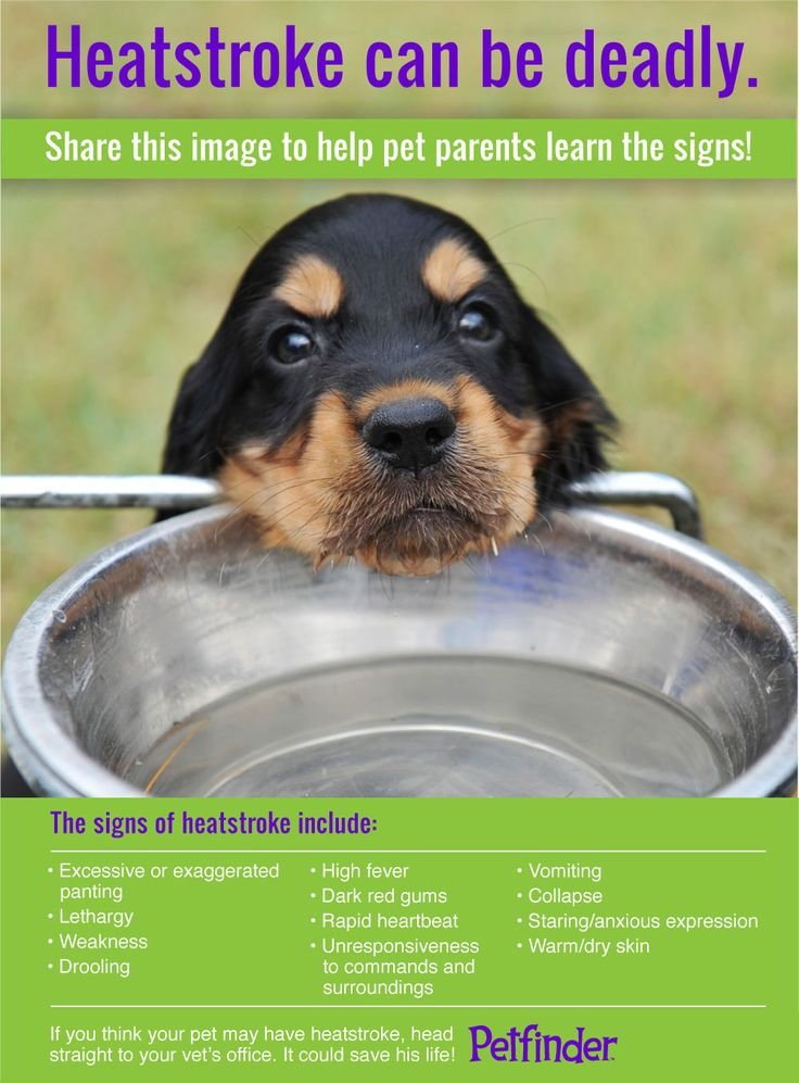 Please keep pets safe.  Don't go for long walks with your dog in the extreme heat. If it's too hot for you, it's extra hot for them.Don't leave dogs in cars in the summer either!!