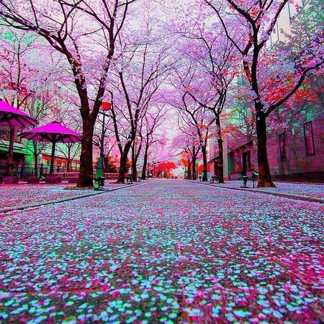 Tokyo Japan Destinations Pinterest