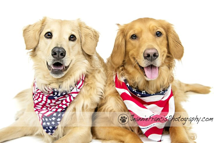 memorial day dog pictures