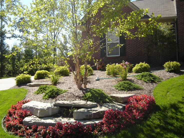 Landscaping With Paper Birch Trees : Red begonia flower bed with limestone leading up to river