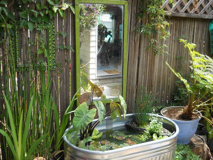 Olives container pond PLANT - water features Pinterest