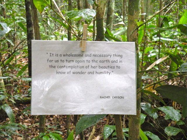 Plantation : Essay, Speech, Paragraph, Importance, Short Note