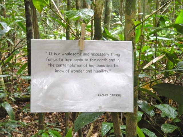 tree plantation short paragraph