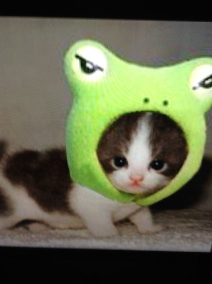 Cats Wearing Frog Hat