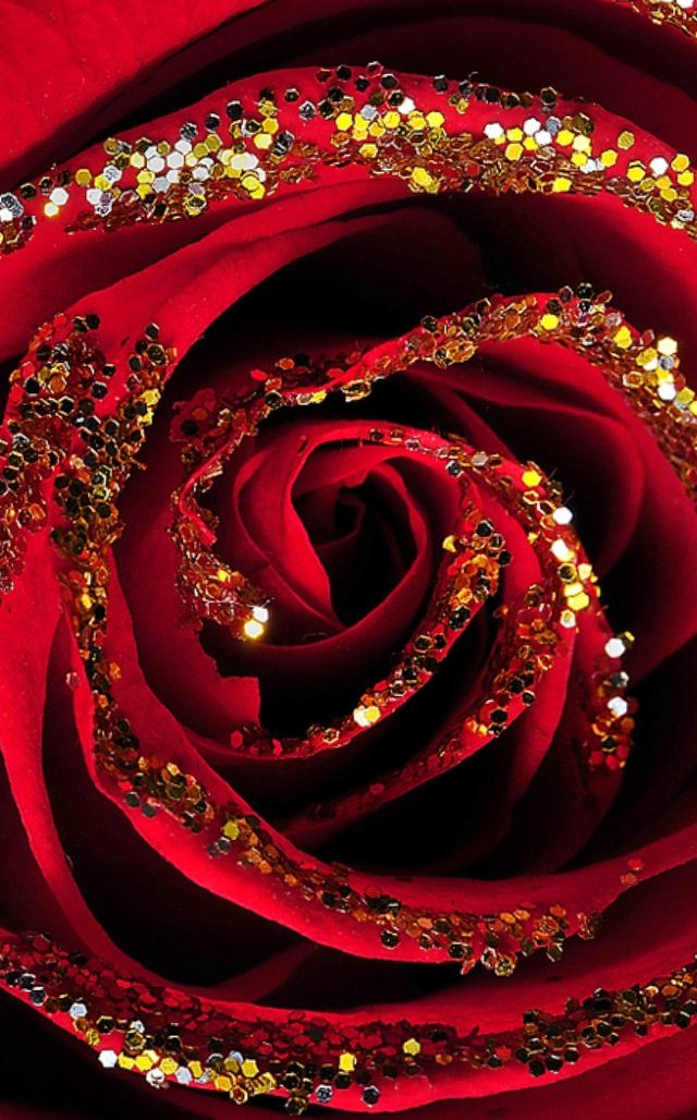Red Rose with gold glitter