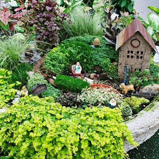 Ideal plants for a fairy garden mini garden plant ideas - Miniature fairy garden plants ...