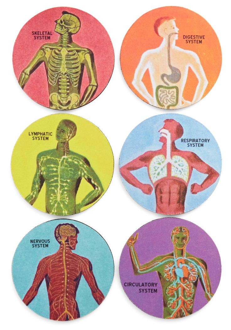 Pour Anatomy A Drink Coaster Set