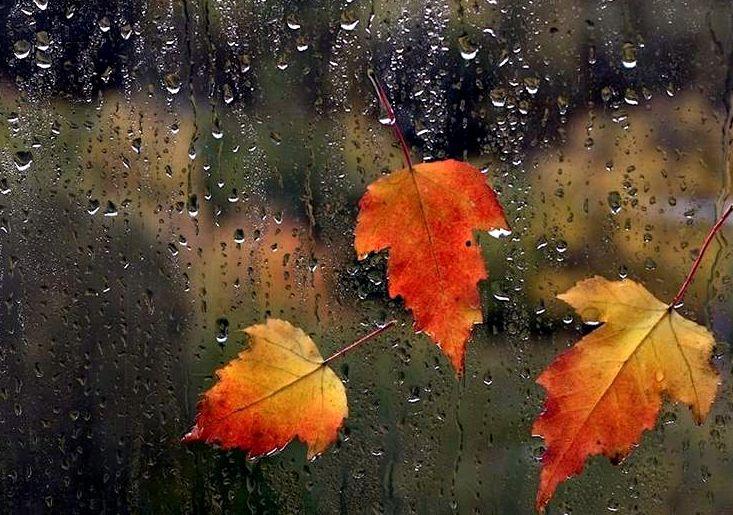 neşeli yağmur