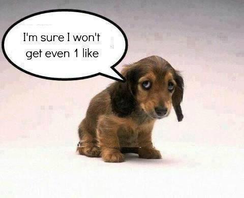 Sad Puppy   cute!!!   Pinterest