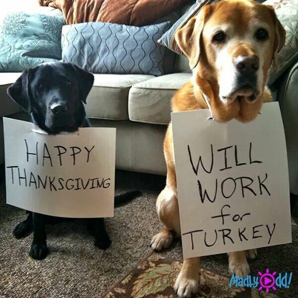 10 Thanksgiving Disaster Stories