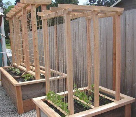 Vegetable Trellis Vertical Vegetable Gardening Pinterest