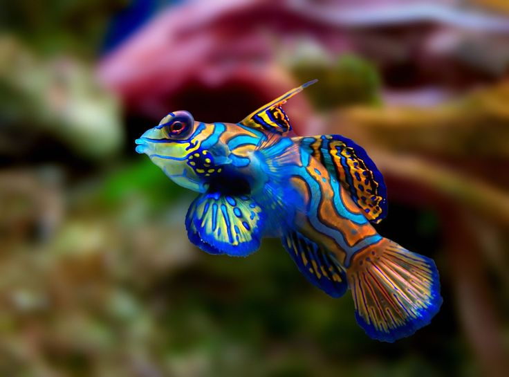 Top 10 most beautiful animals in the world for Popular saltwater fish