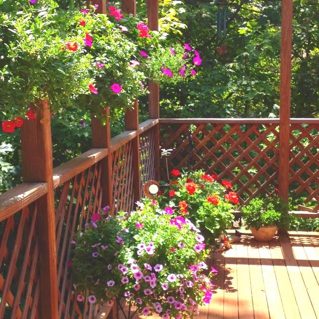 Container gardening ideas pinterest photograph deck contai for Garden decking planting ideas