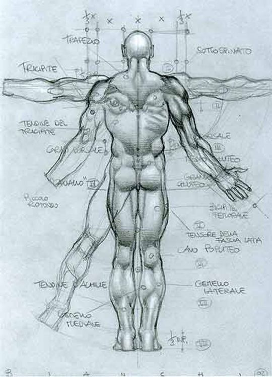 Human Anatomy Reference Guide Drawing Referen