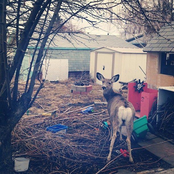 Oh, Deer. Alicia Price / VagabondBond