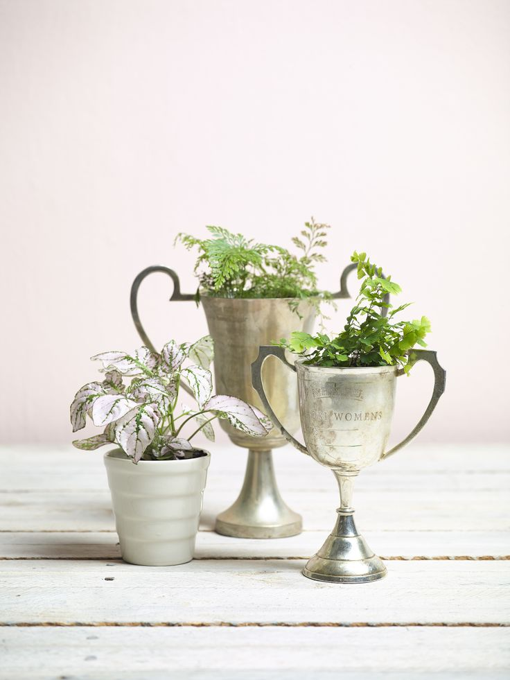 Trophies - Plant vintage trophies with herbs or indoor varieties. Created by Juliette Wanty. Photography by Melanie Jenkins. Your Home & Garden March 2014.