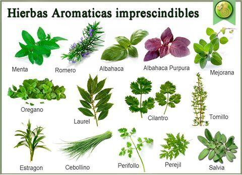 hierbas arom ticas imprescindibles plantas y flores