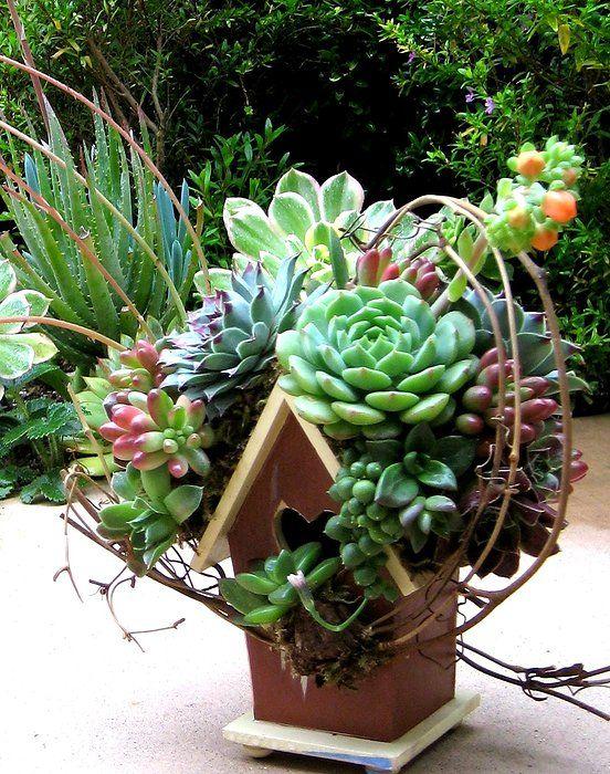 The Succulent container gardens Flora Pinterest